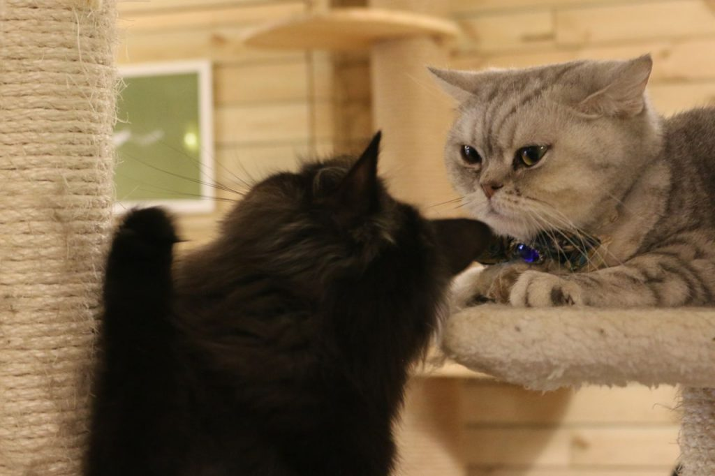 Cat Cafe Hong Kong