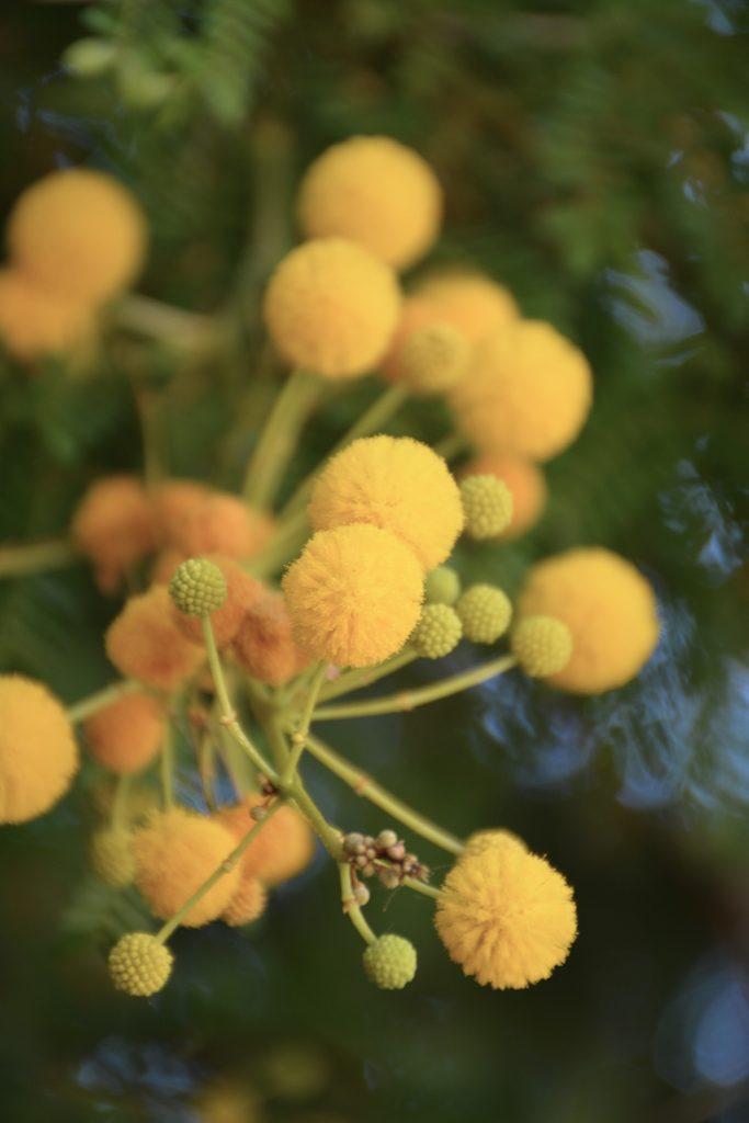 palermo botanische tuin
