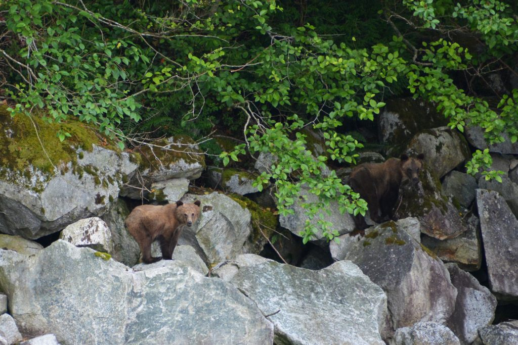 grizzly jongen