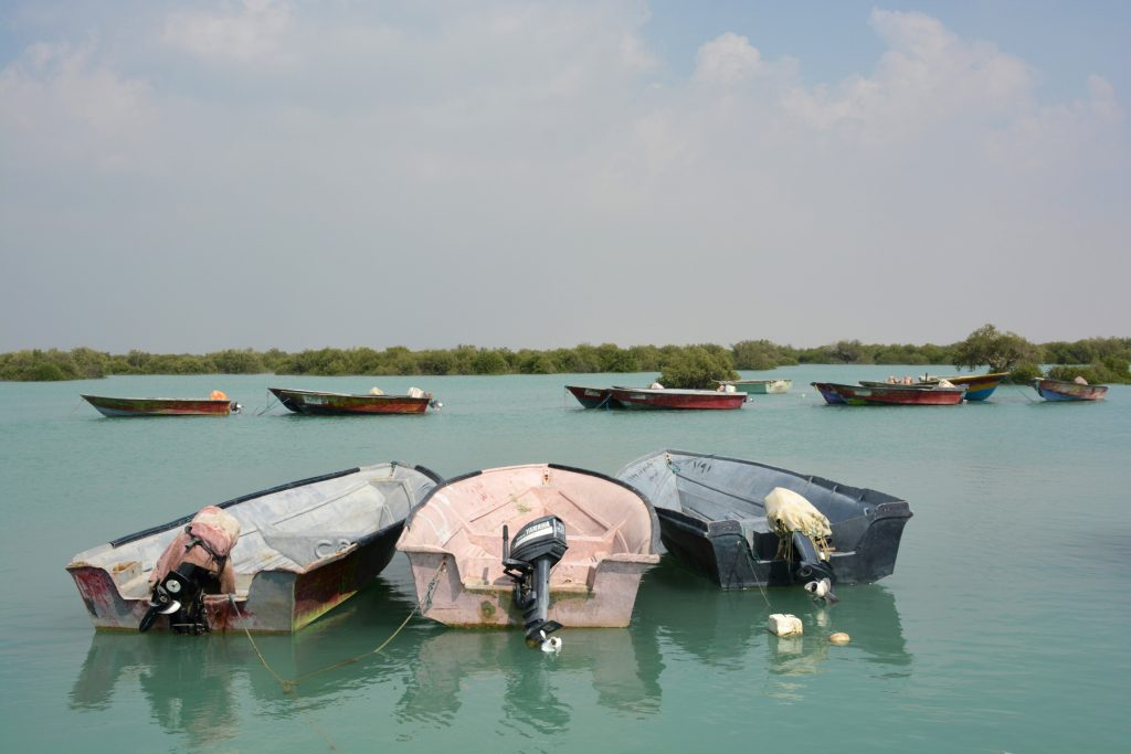 mangrove qeshm island